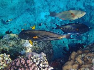 diving-829874_640